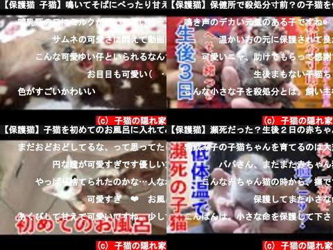 子猫の隠れ家(おすすめch紹介)
