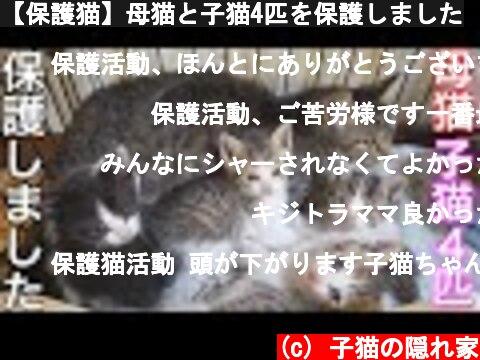 【保護猫】母猫と子猫4匹を保護しました  (c) 子猫の隠れ家