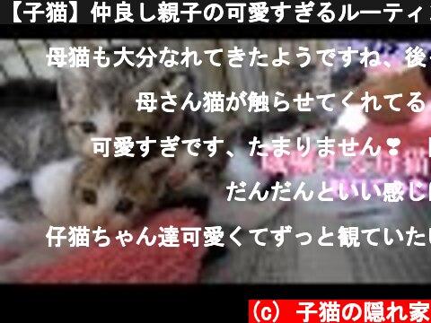 【子猫】仲良し親子の可愛すぎるルーティンがこちら  (c) 子猫の隠れ家