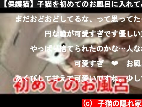 【保護猫】子猫を初めてのお風呂に入れてみたらお利口さんだった【保護子猫】  (c) 子猫の隠れ家