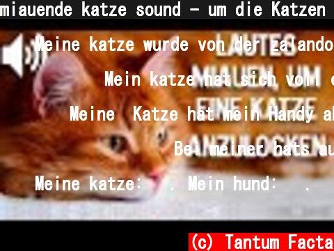 miauende katze sound - um die Katzen anzulocken  (c) Tantum Facta