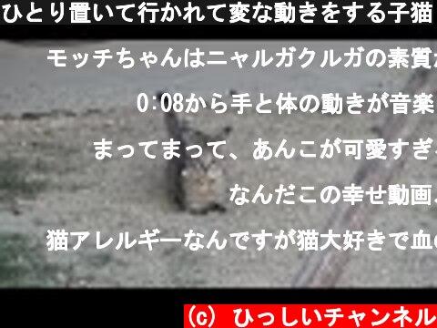 ひとり置いて行かれて変な動きをする子猫  (c) ひっしいチャンネル