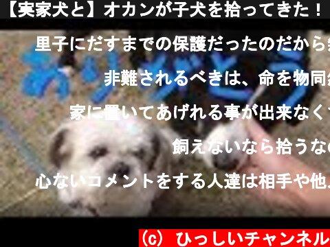 【実家犬と】オカンが子犬を拾ってきた!【ご報告】  (c) ひっしいチャンネル