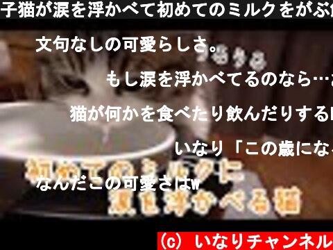 子猫が涙を浮かべて初めてのミルクをがぶ飲み!  (c) いなりチャンネル
