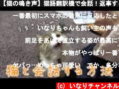 【猫の鳴き声】猫語翻訳機で会話!返事する姿が可愛すぎる  (c) いなりチャンネル