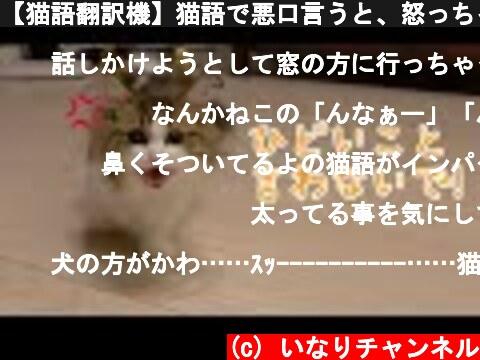 【猫語翻訳機】猫語で悪口言うと、怒っちゃう猫が可愛い!  (c) いなりチャンネル
