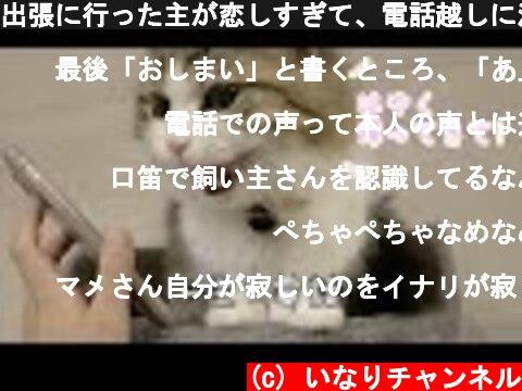 出張に行った主が恋しすぎて、電話越しに泣き叫ぶモフ猫!  (c) いなりチャンネル