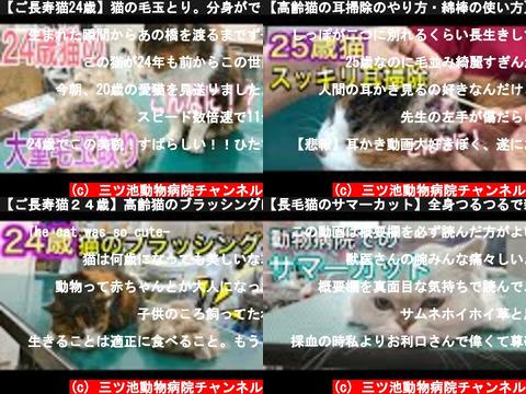 三ツ池動物病院チャンネル(おすすめch紹介)