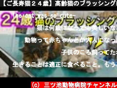【ご長寿猫24歳】高齢猫のブラッシングは、こんなにも平和。  (c) 三ツ池動物病院チャンネル