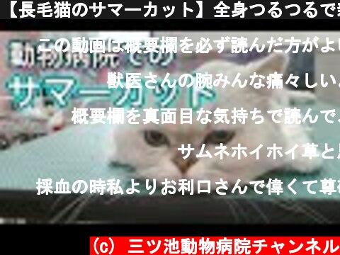 【長毛猫のサマーカット】全身つるつるで新しい生き物が生まれました。かわいいままだけど。  (c) 三ツ池動物病院チャンネル