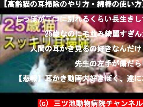 【高齢猫の耳掃除のやり方・綿棒の使い方】25歳猫ドロドロ耳がスッキリぴかぴかに!  (c) 三ツ池動物病院チャンネル
