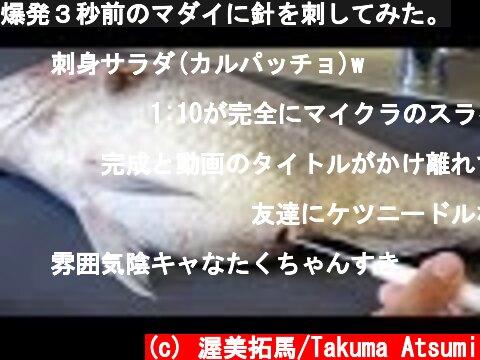 爆発3秒前のマダイに針を刺してみた。  (c) 渥美拓馬/Takuma Atsumi