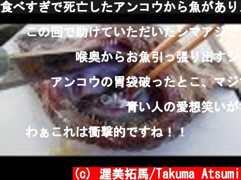 食べすぎで死亡したアンコウから魚がありえないくらい出てきた!!!!!  (c) 渥美拓馬/Takuma Atsumi
