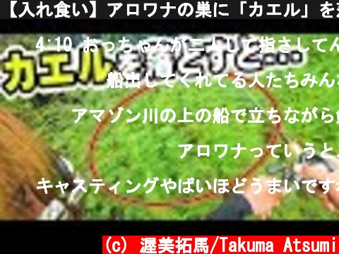 【入れ食い】アロワナの巣に「カエル」を落としたらとんでもないことになった!!!!!  (c) 渥美拓馬/Takuma Atsumi