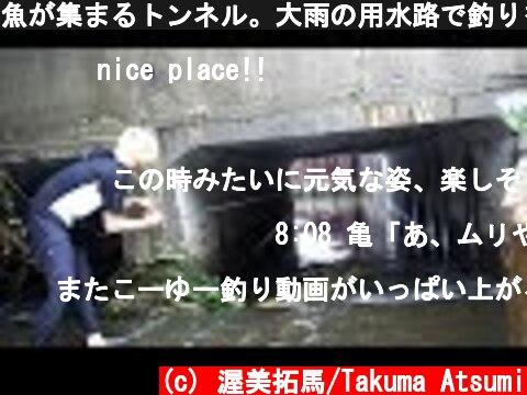 魚が集まるトンネル。大雨の用水路で釣りをしたら大型魚が連発した!!!  (c) 渥美拓馬/Takuma Atsumi