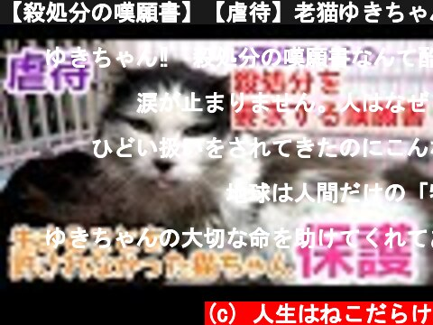 【殺処分の嘆願書】【虐待】老猫ゆきちゃんの保護に同行させていただきました!  (c) 人生はねこだらけ
