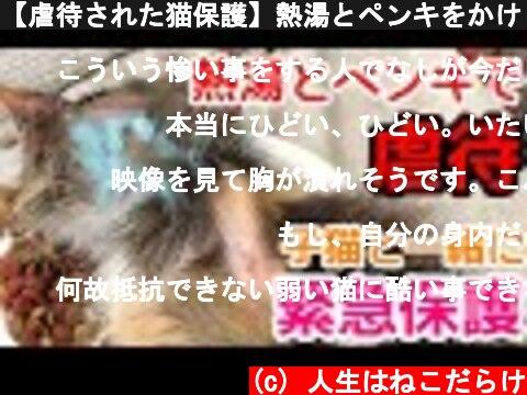 【虐待された猫保護】熱湯とペンキをかけられた野良猫とその子猫2匹緊急保護  (c) 人生はねこだらけ