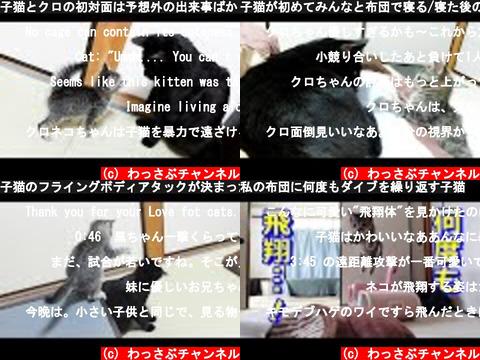 わっさぶチャンネル(おすすめch紹介)