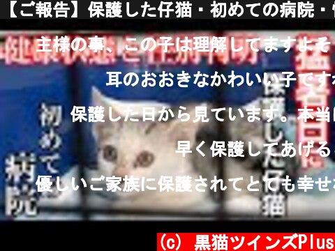 【ご報告】保護した仔猫・初めての病院・性別判明と現在の健康状態。  (c) 黒猫ツインズPlus