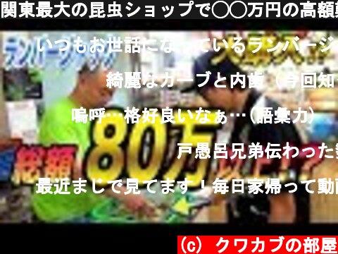 関東最大の昆虫ショップで◯◯万円の高額難関種を購入しました  (c) クワカブの部屋