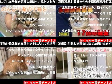 ちゅー猫チャンネル(おすすめch紹介)