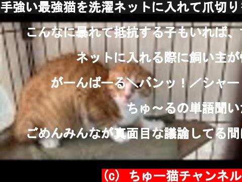 手強い最強猫を洗濯ネットに入れて爪切りをするまでの過程【The cat isn't friendly with people, using a laundry net】  (c) ちゅー猫チャンネル