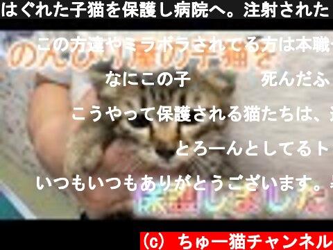 はぐれた子猫を保護し病院へ。注射されたら死んたフリをする子猫ちゃん(笑)かわいいです【We rescued a kitten】  (c) ちゅー猫チャンネル