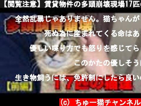 【閲覧注意】賃貸物件の多頭崩壊現場17匹の猫達~前編~【Animal hoarding】  (c) ちゅー猫チャンネル