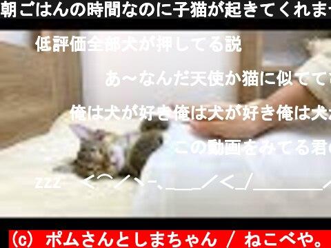 朝ごはんの時間なのに子猫が起きてくれません…。  (c) ポムさんとしまちゃん / ねこべや。