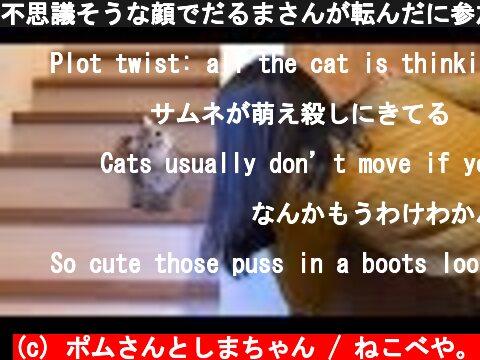 不思議そうな顔でだるまさんが転んだに参加する子猫!  (c) ポムさんとしまちゃん / ねこべや。