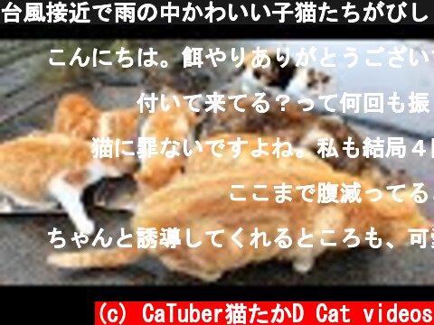 台風接近で雨の中かわいい子猫たちがびしょ濡れで鳴き叫ぶ 母猫2匹が子猫たちの居場所を案内する カルカン(kalkan)を給餌 ちゅ~るを給餌したらとんでもないことに 野良猫 感動猫動画  (c) CaTuber猫たかD Cat videos