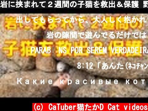 岩に挟まれて2週間の子猫を救出&保護 野良猫 感動猫動画  (c) CaTuber猫たかD Cat videos