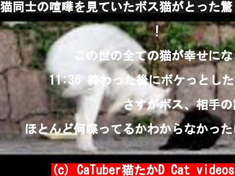 猫同士の喧嘩を見ていたボス猫がとった驚くべき行動とは? 野良猫 感動猫動画 EOSR5  (c) CaTuber猫たかD Cat videos
