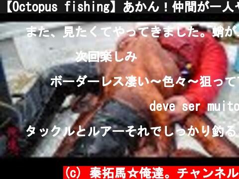 【Octopus fishing】あかん!仲間が一人やられた…  (c) 秦拓馬☆俺達。チャンネル