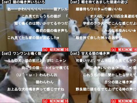 NEKONOME16 (おすすめch紹介)