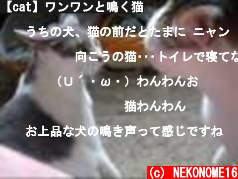 【cat】ワンワンと鳴く猫  (c) NEKONOME16