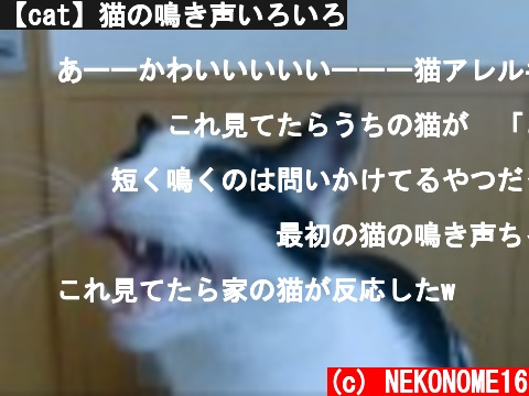 【cat】猫の鳴き声いろいろ  (c) NEKONOME16