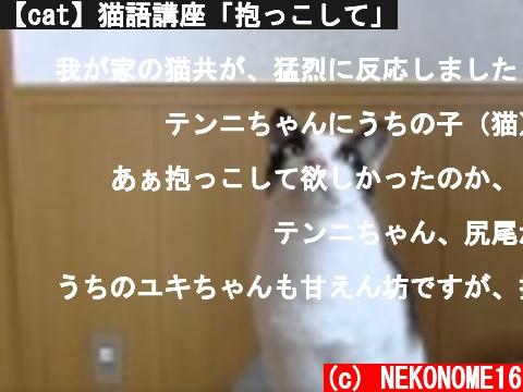 【cat】猫語講座「抱っこして」  (c) NEKONOME16