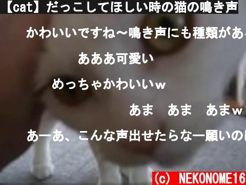 【cat】だっこしてほしい時の猫の鳴き声  (c) NEKONOME16
