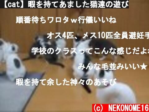 【cat】暇を持てあました猫達の遊び  (c) NEKONOME16