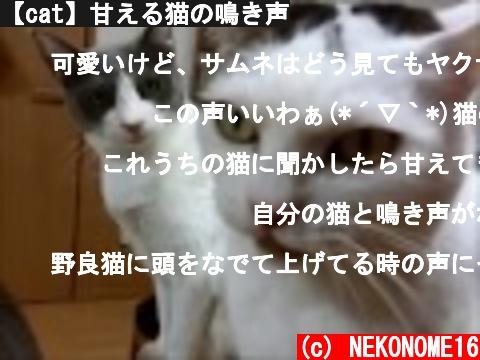 【cat】甘える猫の鳴き声  (c) NEKONOME16