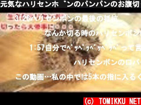元気なハリセンボンのパンパンのお腹切ったら大量のアレがでてきた!!  (c) TOMIKKU NET