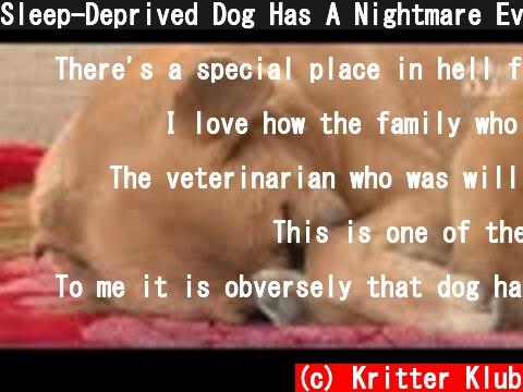 Sleep-Deprived Dog Has A Nightmare Every Night | Animal in Crisis EP46  (c) Kritter Klub