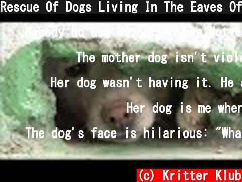 Rescue Of Dogs Living In The Eaves Of A Roof | Kritter Klub  (c) Kritter Klub