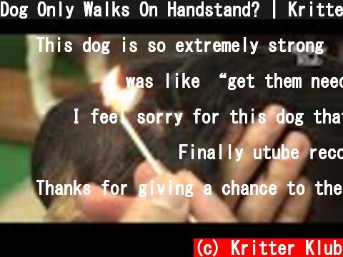 Dog Only Walks On Handstand? | Kritter Klub  (c) Kritter Klub