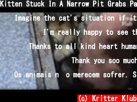 Kitten Stuck In A Narrow Pit Grabs Passengers To Play With Him | Kritter Klub  (c) Kritter Klub