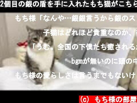 2個目の銀の盾を手に入れたもち猫がこちらです笑  (c) もち様の部屋