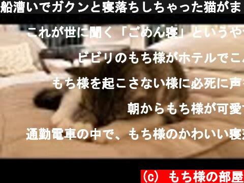 船漕いでガクンと寝落ちしちゃった猫がまじかわいすぎたwww  (c) もち様の部屋