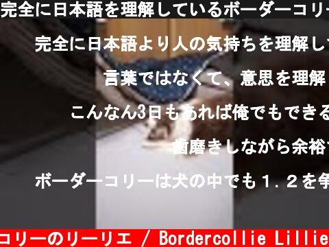 完全に日本語を理解しているボーダーコリーさん #shorts  (c) ボーダーコリーのリーリエ / Bordercollie Lillie