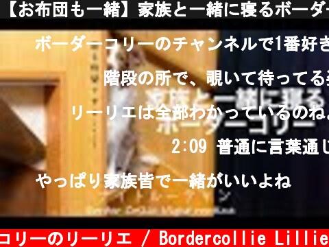 【お布団も一緒】家族と一緒に寝るボーダーコリーの行動が愛おしすぎるっ!【ナイトルーティン】  (c) ボーダーコリーのリーリエ / Bordercollie Lillie